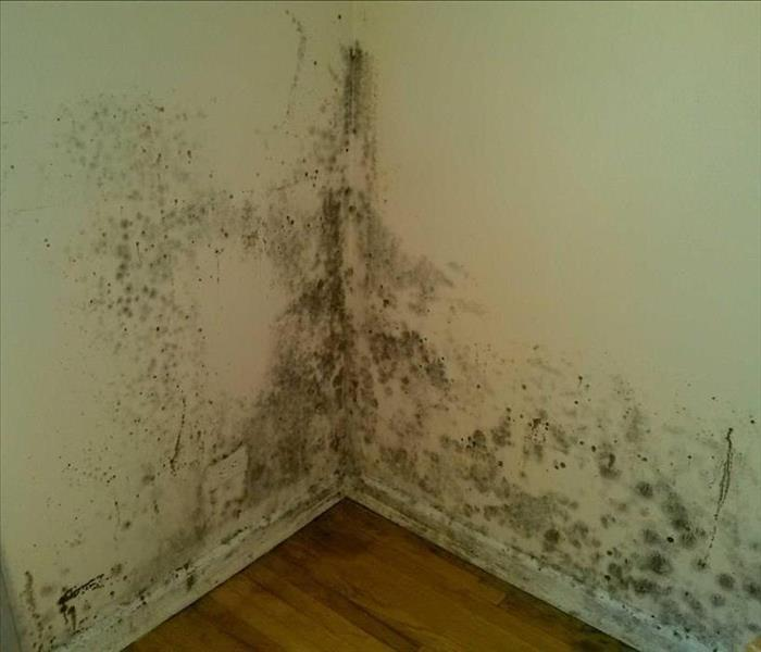 Mold Remediation Beware of Mold