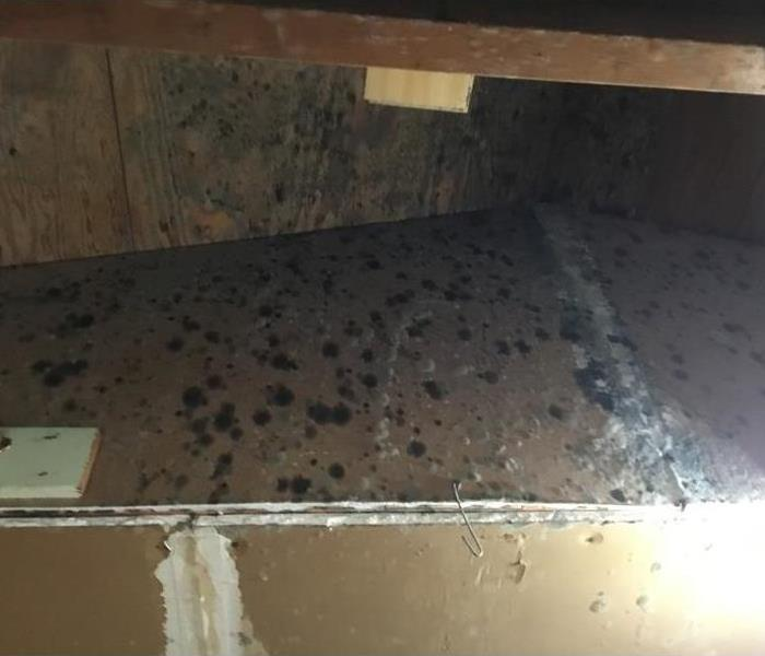 Mold Remediation How to Prevent Mold After Water Damage