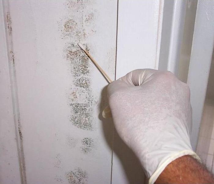 Mold Remediation Indoor Air Quality/Environmental Professional